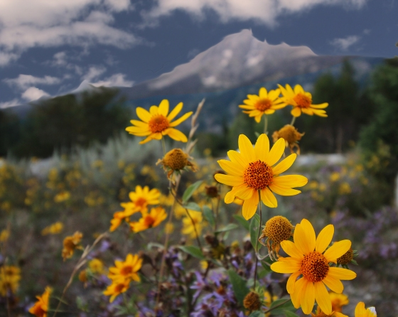 Flower & Mountain